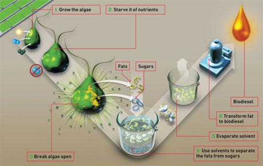 biocarburant algue technologies propres