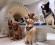 kutyaetológia -- kutatás -- fMRI -- ELTE (fotó: ELTE/Kubinyi Enikő)